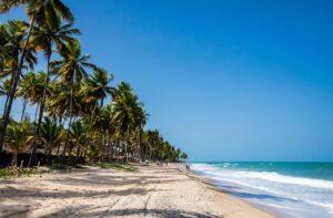 green palm trees on beach shore