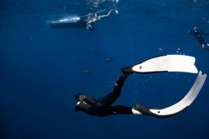 unrecognizable diver swimming in blue sea